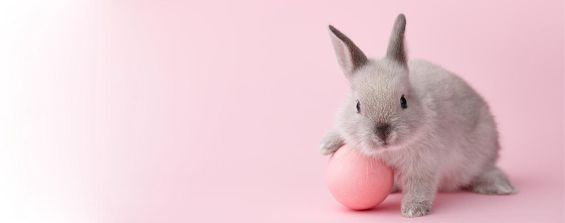 """""""Puuuuusia, niech ja Cię dorwę!"""": Dlaczego królik gryzie kable i meble?"""